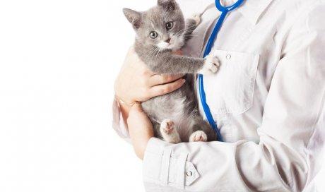 Produits vétérinaires Longages